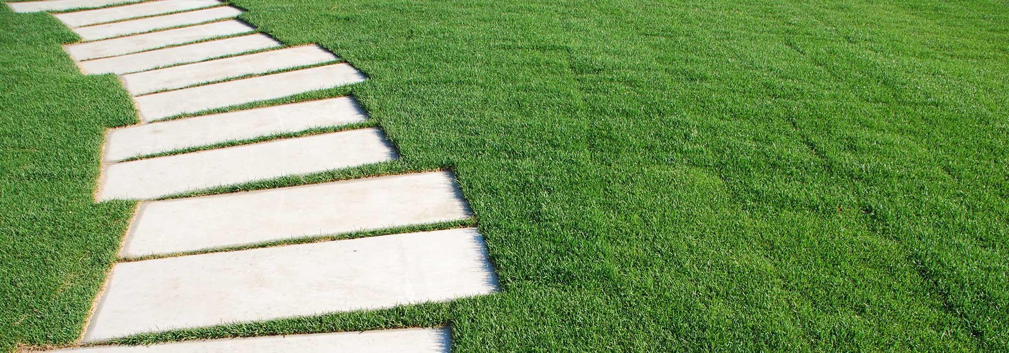Image Result For Clover Lawns