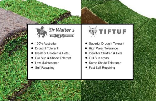 What is the difference between Tiftuf and Sir Walter